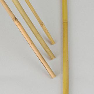 Bambukäpp 100 cm, 10 st