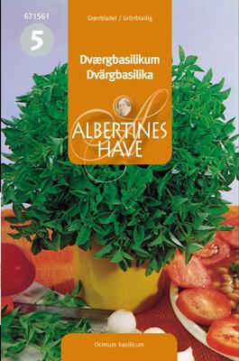 Dvärgbasilika, grönbladig Frö & fröer