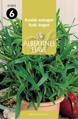 Rysk dragon A.dracunculus Frö & fröer