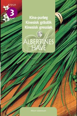Kinesisk-Gräslök Allium Tuberosum Frö & fröer