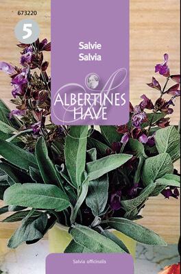 Salvia Salvia off. Flerårig Frö & fröer