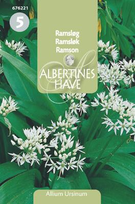 Ramslök ( Allium ursinum )  NY Frö & fröer
