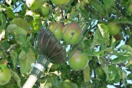 Äppelplockare, gröna (utan skaft)