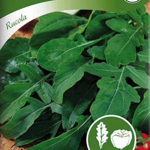 Rucola / Senapskål frö