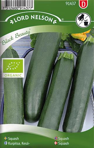 Squash, Black Beauty, Organic frö