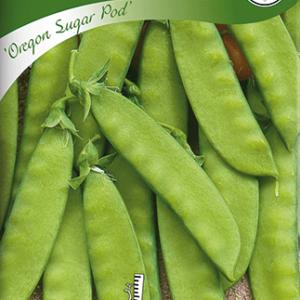 Sockerärtor, Oregon Sugar Pod, halvhög frö