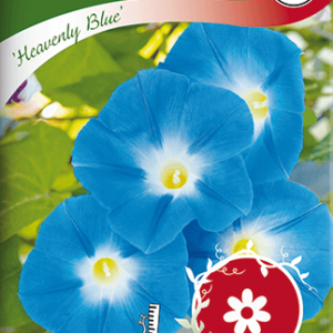 Blomman för dagen, Heavenly Blue frö