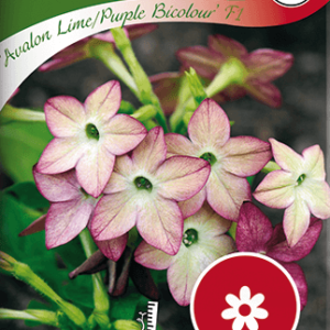 Blomstertobak, Avalon Lime/Purple F1 frö