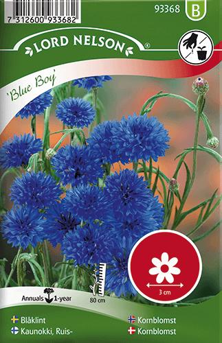 Blåklint, Blue Boy, blå frö