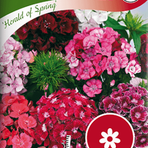 Borstnejlika,, Herald of Spring frö