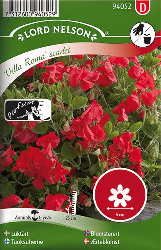 Luktärt, Villa Roma scarlet låg, Doftande frö