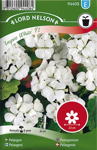 Pelargon, Inspire White F1, vit frö