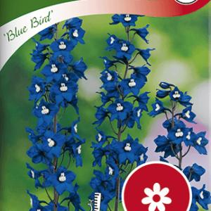 Riddarsporre, Trädgårds-, Blue Bird, blå frö