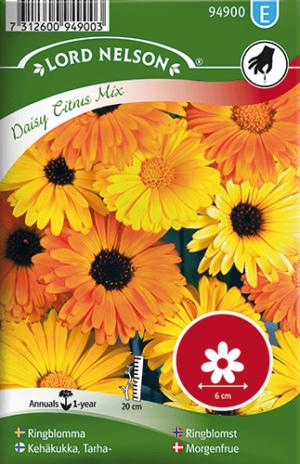 Ringblomma, Daisy Citrus mix, låg frö