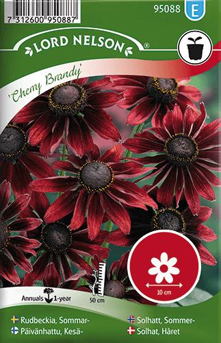 Rudbeckia, Sommar-, Cherry Brandy frö