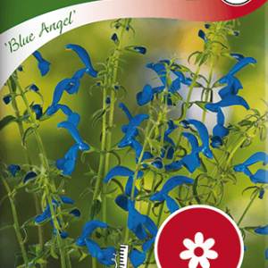 Blåsalvia, Blue Angel frö