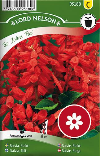 Praktsalvia, St. Johns Fire, röd frö