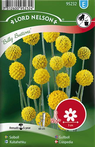 Solboll, Billy Buttons frö