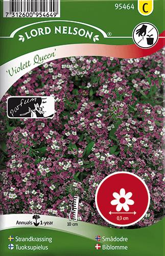 Strandkrassing, Violett Queen, Doftande frö