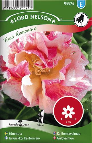 Sömntuta, Rosa Romantica frö