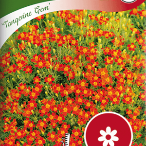 Tagetes, Liten, Tangerine Gem frö