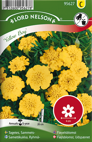 Tagetes, Sammets-, Yellow Boy frö