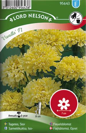 Tagetes, Stor-, Vanilla F1 frö