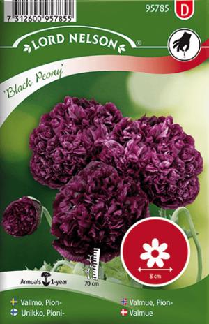 Vallmo, Pion-, Black Peony frö