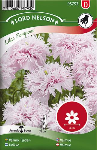Vallmo, Fjäder-, Lilac Pompom frö
