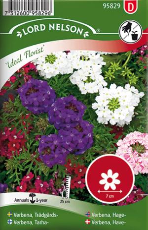Verbena, Trädgårds-, Ideal Florist frö
