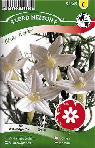 Vinda, Fjäderstjärn-, White Feather frö