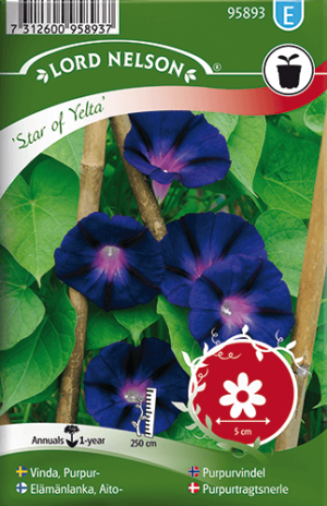 Vinda, Purpur-, Star of Yelta frö