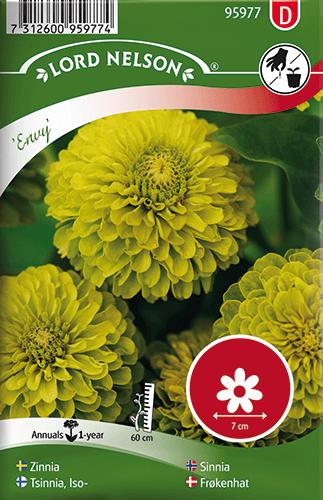 Zinnia, Envy, hög, limegrön frö