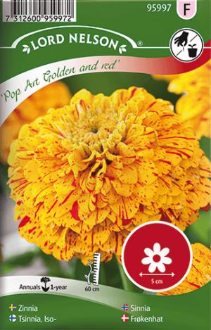 Zinnia, Pop Art Gold & Red frö
