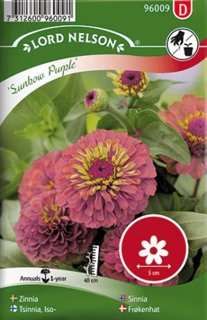 Zinnia, Sunbow Purple frö
