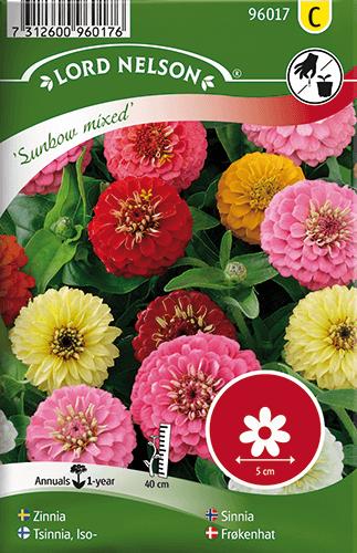 Zinnia, Sunbow, bl färger frö