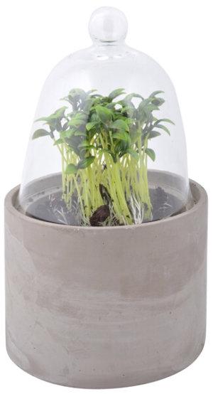 Betongkruka med växtklocka i glas M