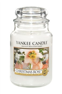 Christmas Rose Stor burk