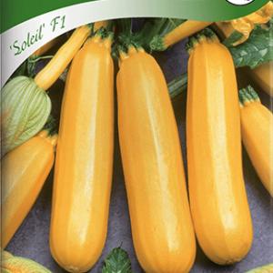 Squash, Soleil F1, gul frö