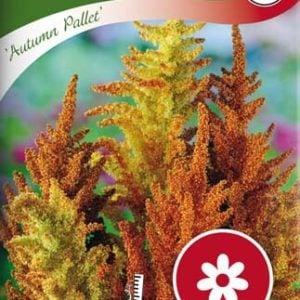 Amarant, Blod-, Autumn Pallet