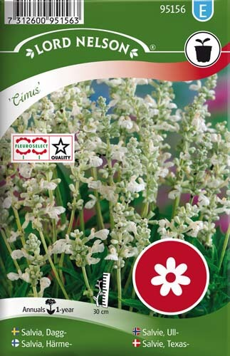 Salvia, Dagg-, Cirrus, silvervit