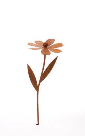 Blomma 29cm, Rost